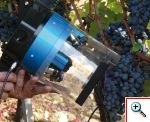 maturazione dell'uva. TITLEIMGLIGHTBOX